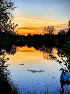 Frisby Lakes with Swan & Sunset