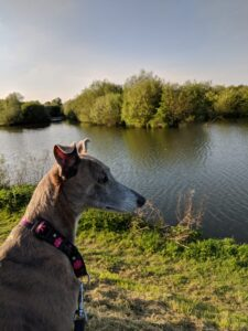 Dog looking out over the lakes