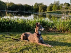 Dog next to Frisby Lakes
