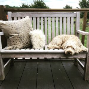 Dog on Seat and Decking